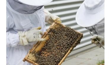 Особливості вибору костюма бджоляра