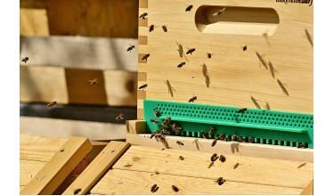 Вулики для бджіл: види та їх особливості