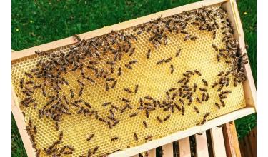 Який краще вибрати розмір бджолиної рамки?