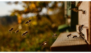 Бджолярство у вуликах-лежаках
