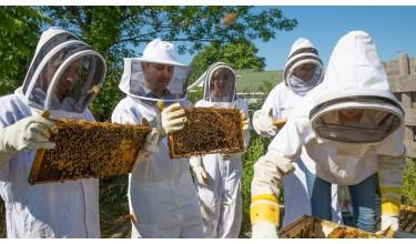 Курси практичного бджільництва