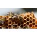 Як вивести матку бджоли?