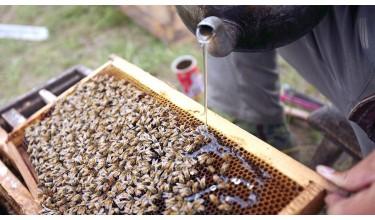 Як приготувати сироп для бджіл