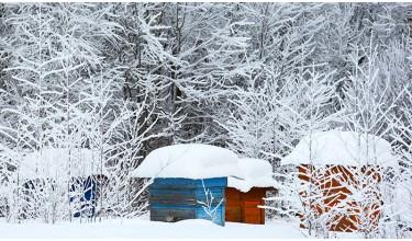Основні аспекти підготовки бджіл до зимівлі