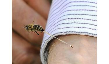 Чому жалить бджола?